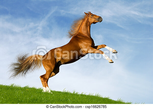 kastanie, feld, pferd, gallops - csp16626785
