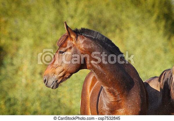 kastanie, pferd - csp7532845
