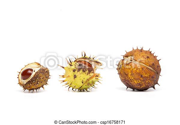 Herbst - drei Kastanien mit Hülle, weißer Hintergrund - csp16758171