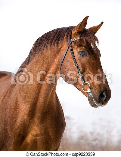 kastanje, verticaal, paarde, winter. - csp9220339