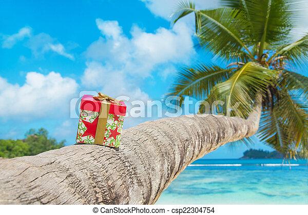 kasten, exotische , kokosnuss, feiertag, geschenk, baum, schleife, handfläche, tropica - csp22304754