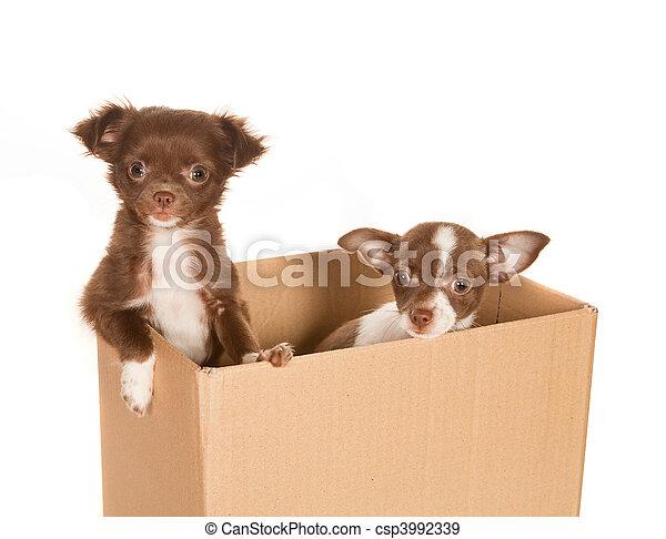 kasten, junger hund, hunden - csp3992339