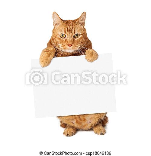 kat, tabby, meldingsbord, vasthouden, leeg - csp18046136