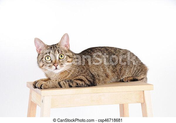Katz Fotoapperat Aussehen Gestreift Aufmerksam Stuhl Liegen