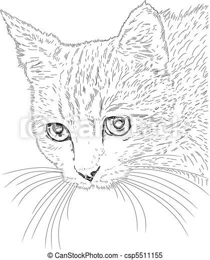 katz, vektor, zeichnung - csp5511155