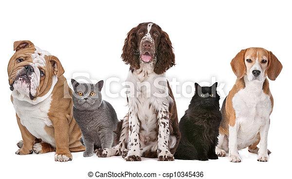 katzen, gruppe, hunden - csp10345436