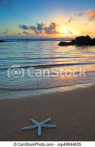 kauai, spiaggia, hawai, starfish, tramonto - csp49844635