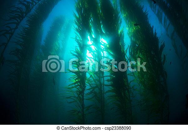 Kelp bed - csp23388090