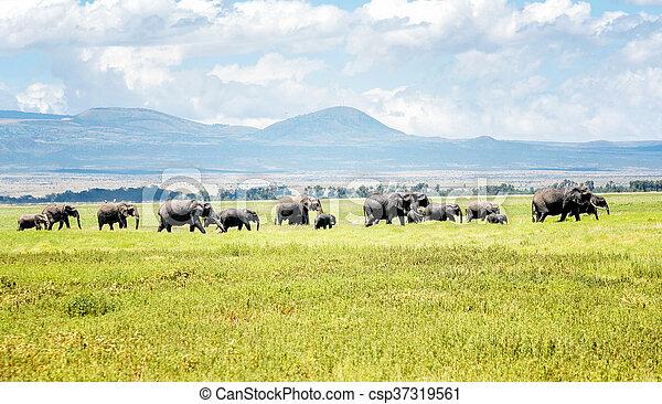 kenya, アフリカ, 象 - csp37319561