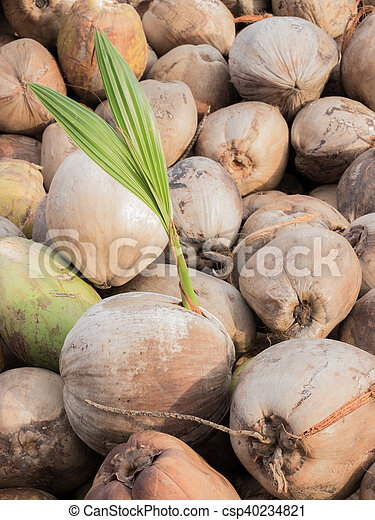 Kern Kokosnuss Industrie Gebraucht Cent Gesehen Copra Unser