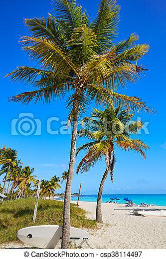 Key west florida Smathers beach palm trees US - csp38114497
