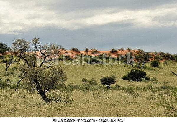 Kgalagadi dune landscape - csp20064025