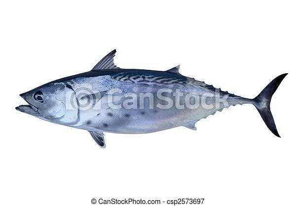 kicsi sínheveder, tunny, elkap, tonhal, tenger gyümölcsei - csp2573697