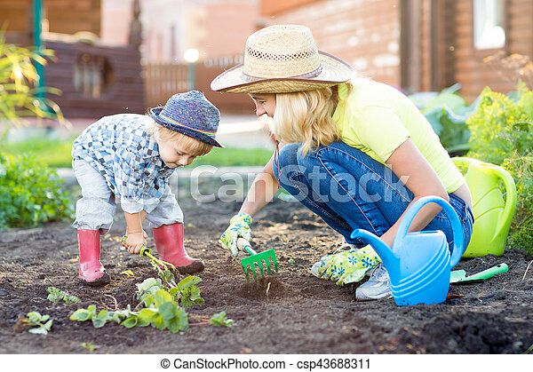 kid and mother planting strawberry seedling into fertile soil outside in garden csp43688311