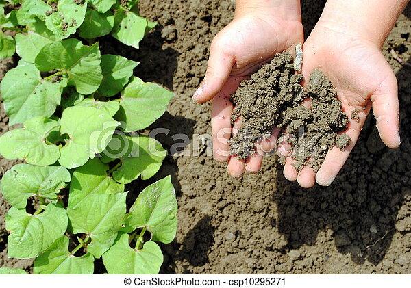 kid hands with soil in the garden - csp10295271