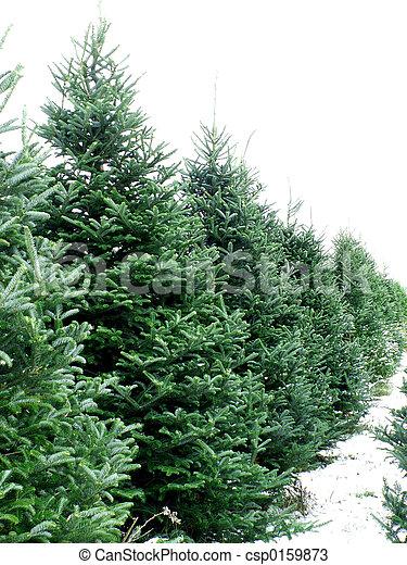 Pinienbäume - csp0159873
