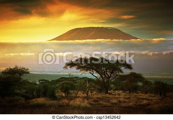 kilimanjaro., 山, amboseli, サバンナ, kenya - csp13452642