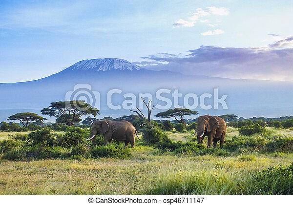 kilimanjaro, 象 - csp46711147