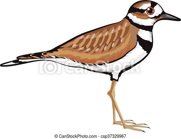 Killdeer ベクトル 鳥 イラスト イラスト 鳥 Killdeer ベクトル