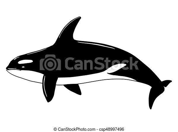 Killer Whale Fish - csp48997496