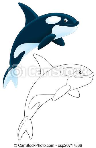 Killer whale - csp20717566