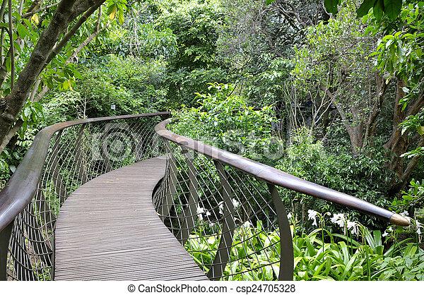 Kirstenbosch Tree Canopy Walkway, the Boomslang - csp24705328