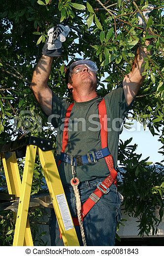 kirurg, träd - csp0081843