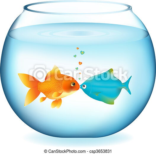 kissing fishes two fishes kissing in aquarium isolated on white rh canstockphoto com aquarium clipart free aquarium clipart black and white