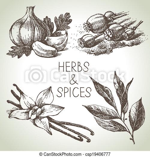 Kitchen herbs and spices. Hand drawn sketch design elements  - csp19406777