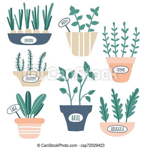 Kitchen herbs collection - csp72029423