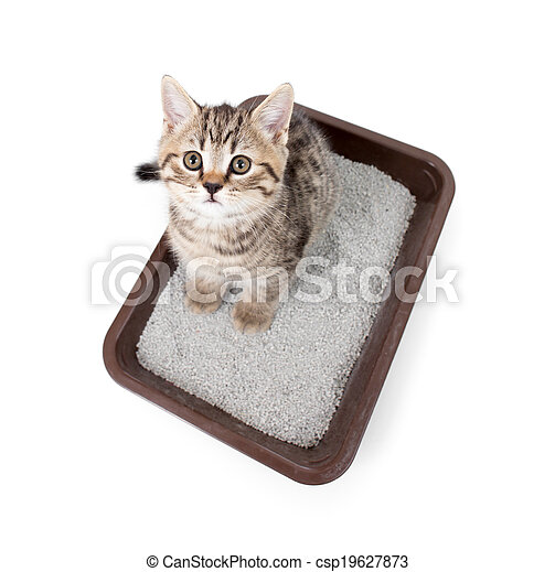 kitten cat in toilet tray box with litter top view isolated on white - csp19627873