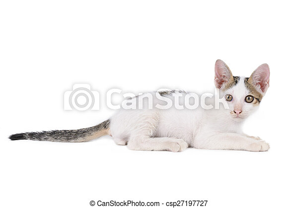 kitten isolated on a white background - csp27197727