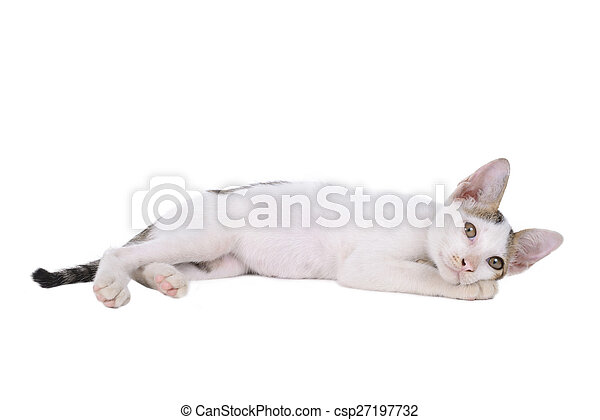 kitten isolated on a white background - csp27197732