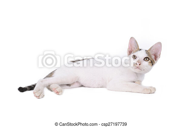 kitten isolated on a white background - csp27197739