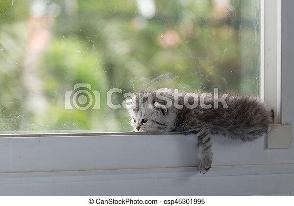 Kitten on window - csp45301995