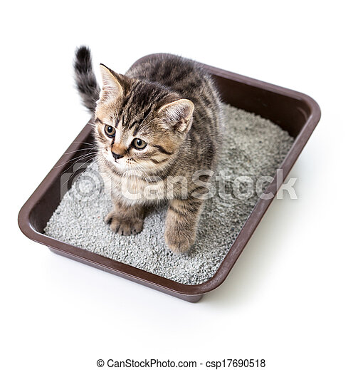 kitten or cat in toilet tray box with absorbent litter isolated - csp17690518