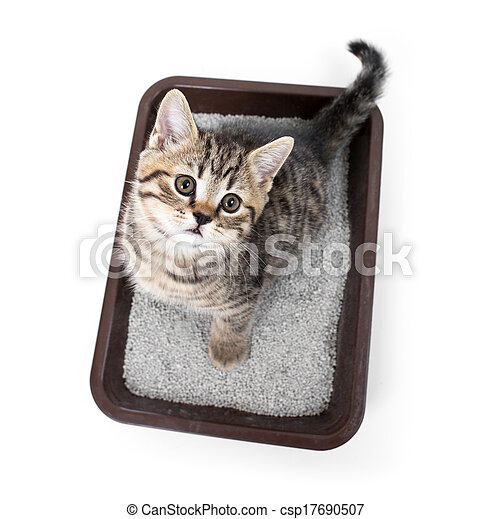 kitten or cat in toilet tray box with absorbent litter isolated top view - csp17690507