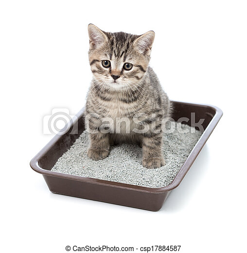kitten or little cat in toilet tray box with litter - csp17884587