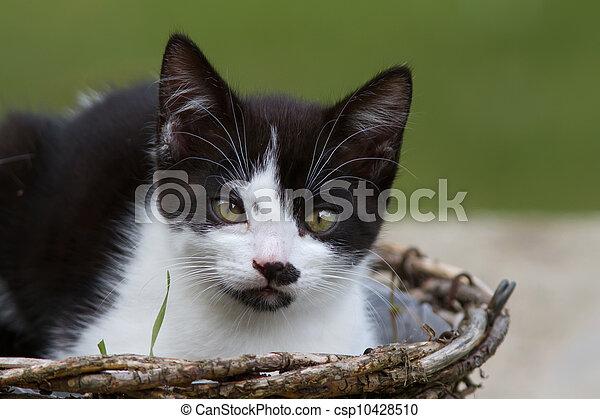 Kitten - csp10428510