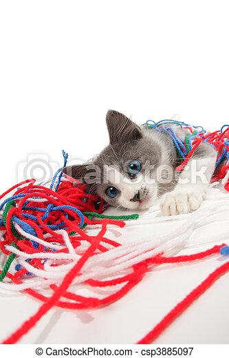 Kitten playing with yarn - csp3885097