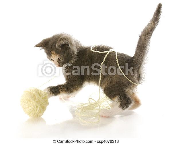 kitten playing with yarn - csp4078318