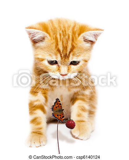 kitty and butterfly - csp6140124
