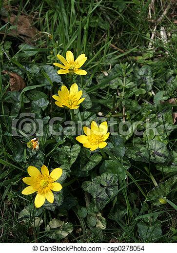 Weniger Celandine, wilde Blumen - csp0278054