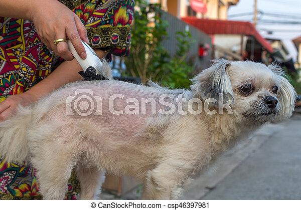 Kliper Futro Fryzura Pies Ludzki Oporządzając