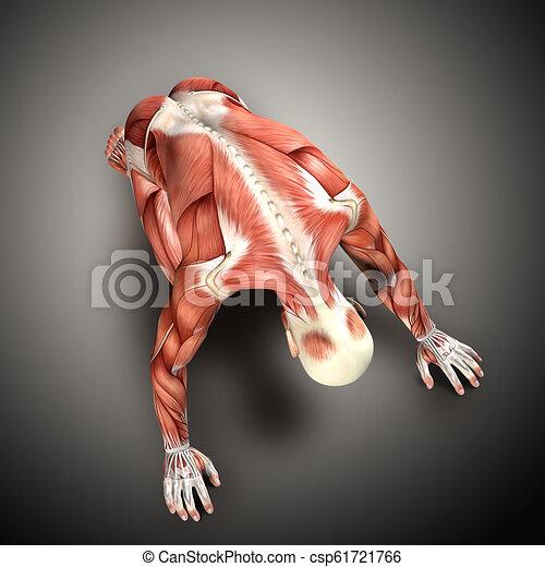 knieling, render, medisch, 3d, figuur, positie, mannelijke  - csp61721766