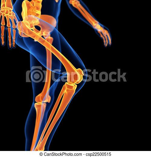 Knochen, bein. Knochen, medizin, 3d, abbildung, bein.