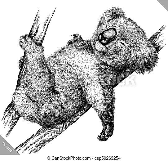 koala, isolé, illustration, vecteur, noir, graver, blanc - csp50263254