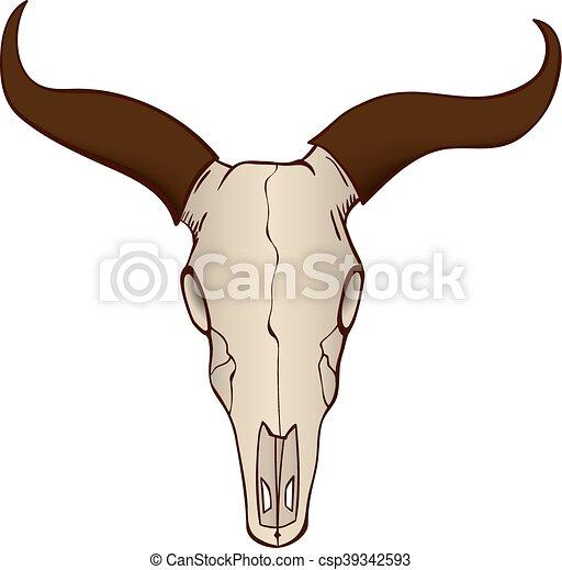 koe, stier, vrijstaand, schedel, of - csp39342593