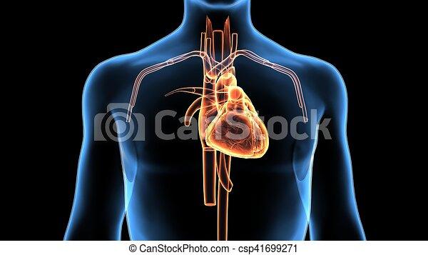 Koerper, herz, abbildung, koerperbau, menschliche , 3d. Herz ...