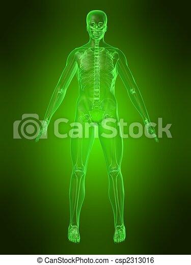 Menschlicher Körper - csp2313016
